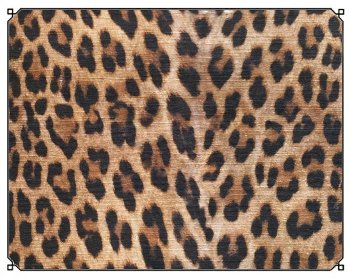 Tibetan Leopard